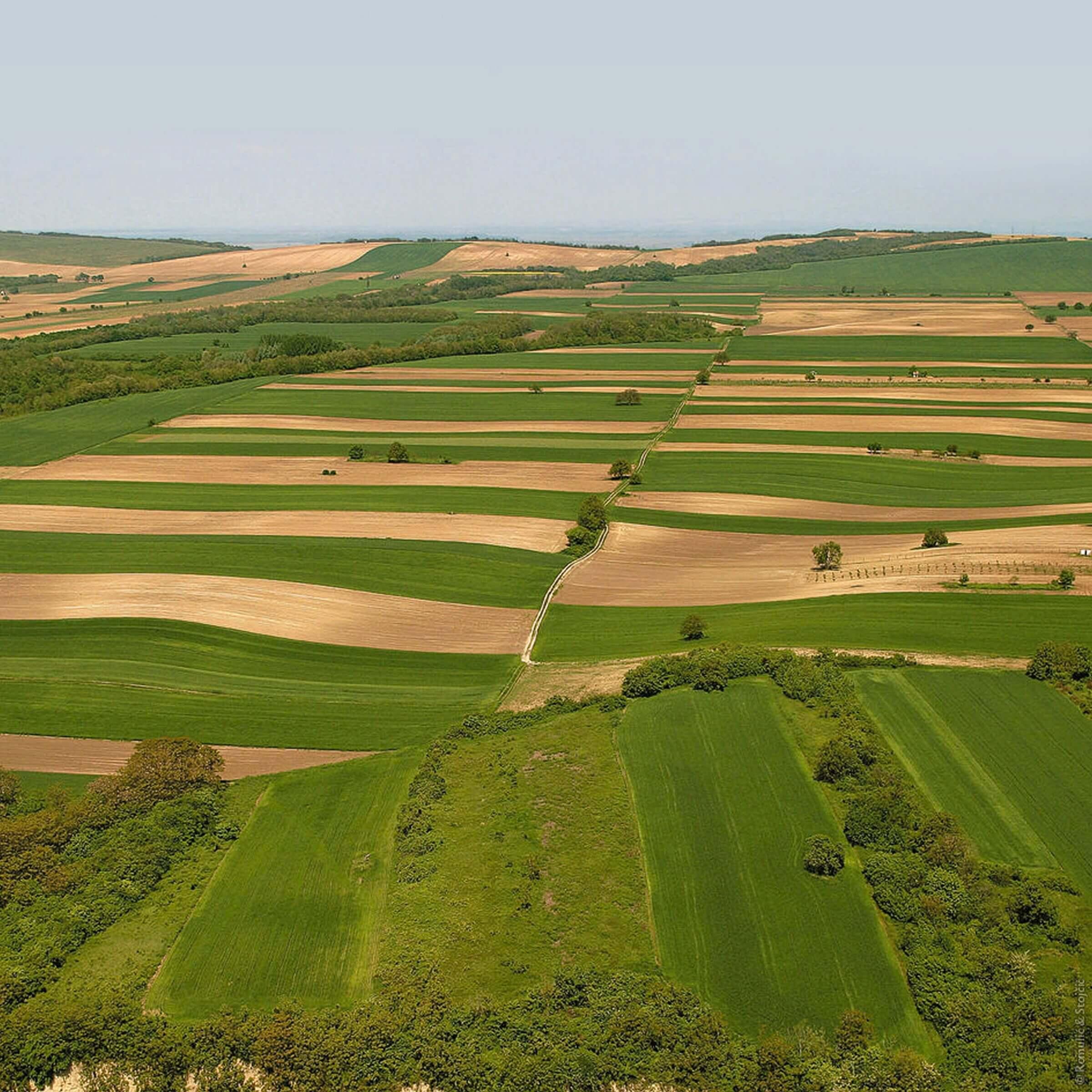 Uz osnovnu djelatnost obrade poljoprivrednih površina i ratarstva, poduzeće se bavi i kooperacijom – integracijom na području Baranje. Suradnja s malim poljoprivrednim gospodarstvima u Baranji podrazumijeva financiranje - kreditiranje malih gospodarstava repromaterijalom za poljoprivrednu proizvodnju – gnojivo, sjeme, gorivo, zaštitna te otkup i skladištenje otkupljenih poljoprivrednih proizvoda Kooperacija se trenutno obavlja na više od 4.500 ha s poljoprivrednim proizvođaćima s područja Baranje.