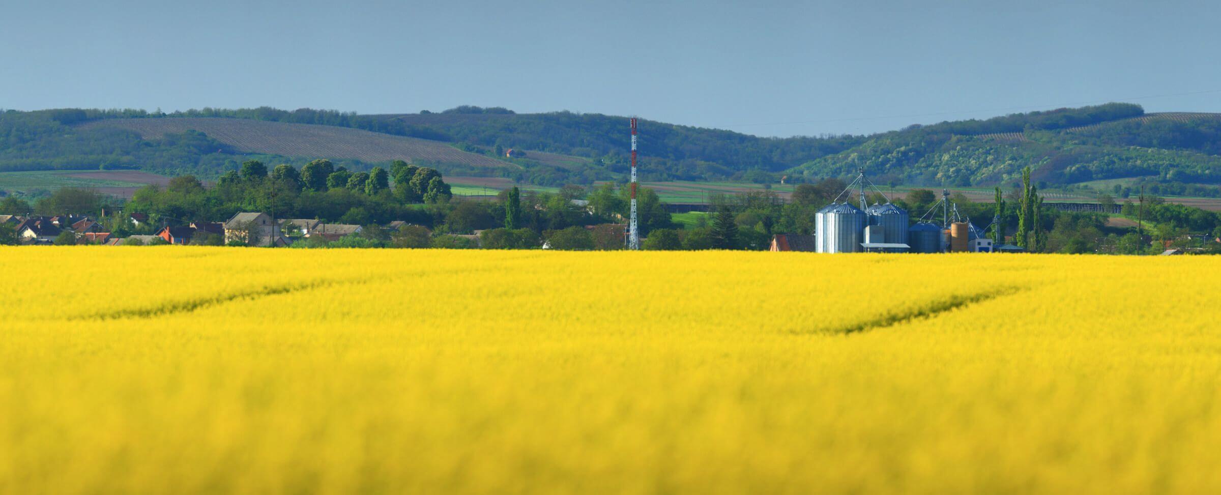 Naše poslovanje podrazumijeva kvalitetnu obradu zemljišta, postizanje visokih prinosa te poboljšanje kvalitete tla i kvalitete poljoprivrednih proizvoda. Osnovne ratarske kulture kojima se društvo bavi su žitarice i uljarice koje obuhvaćaju ječam, pšenicu, kukuruz, suncokret, soju i uljanu repicu.