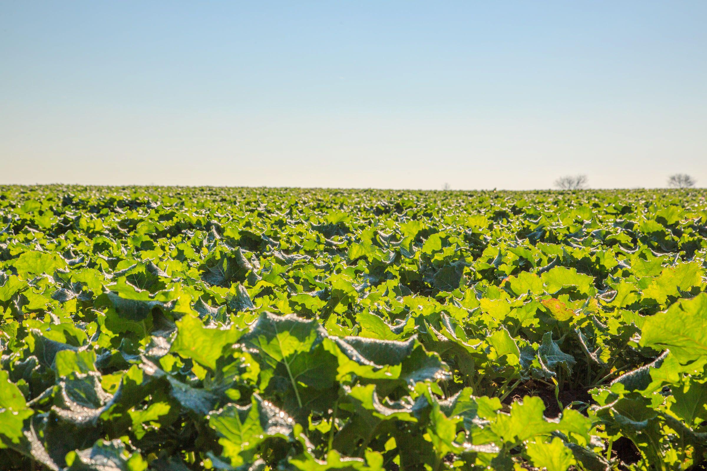 PIK Moravica trenutno obrađuje 2.872 hektara zemlje, od čega u vlasništvu ima 2.745 hektara. Na našim površinama proizvodimo merkantilni kukuruz, pšenicu, ječam, soju, uljanu repicu, te šečernu repu. Osnovna filozofija kompanije je povećanje poljoprivredne proizvodnje, jačanje poslovne učinkovitosti kroz implementaciju proizvodnje sjemenskog kukuruza. Za proizvodnju semenskog kukuruza potrebna su dodatna ulaganja u povećanje tehnološke opremljenosti opreme, odnosno u digitalizaciju agroindustrije. Navedeno se može postići kupovinom nove opreme i mehanizacije koja ima viši stepen tehnološke opremljenosti i digitalizacije , a što i predstavlja preduvjet za proizvodnju sjemenskog kukuruza. Naše poslovanje podrazumijeva kvalitetnu obradu zemljišta, postizanje visokih prinosa te poboljšanje kvalitete tla i kvalitete poljoprivrednih proizvoda.